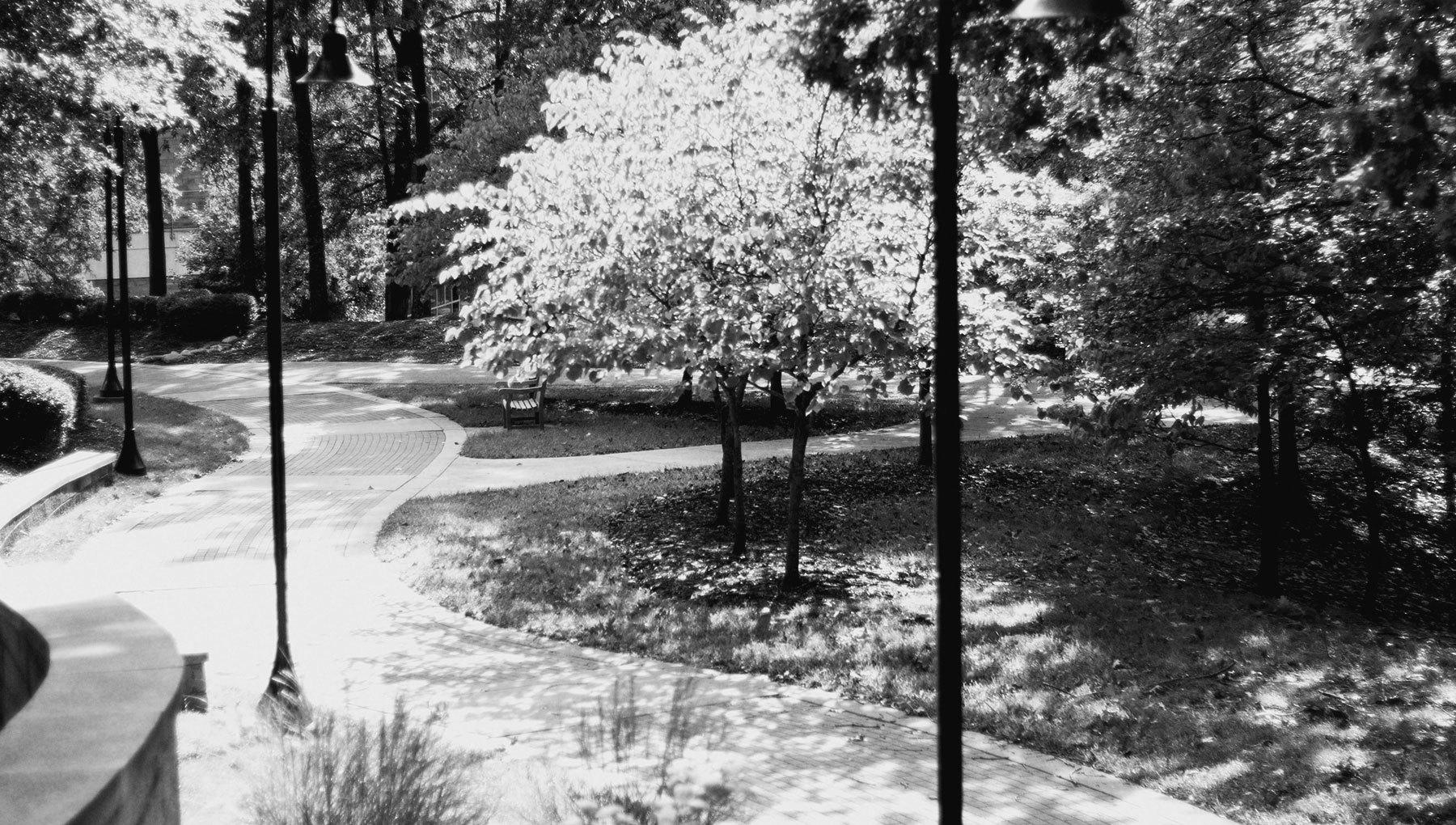 Uncsa Trees